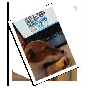 Millie - Office Motivator